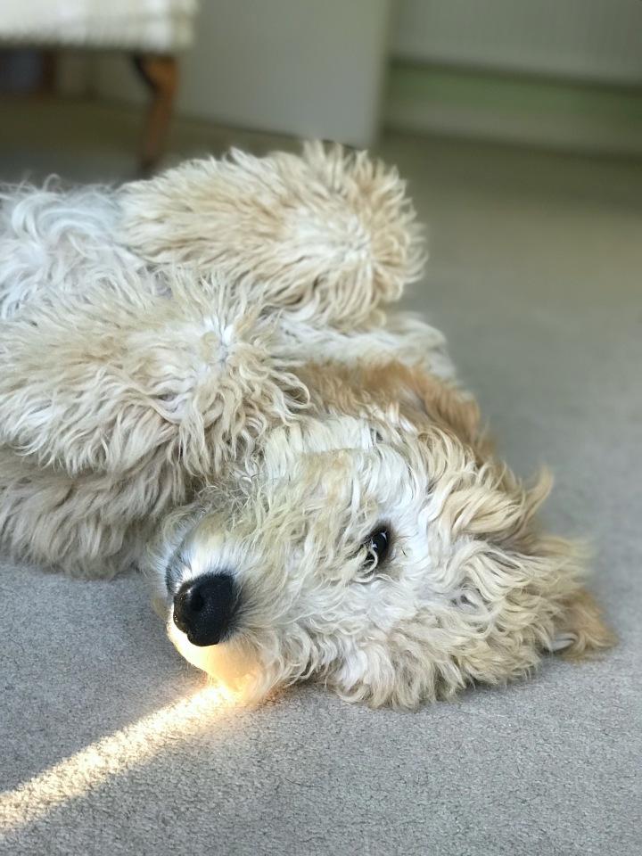 We got a Puppy-Amber!!